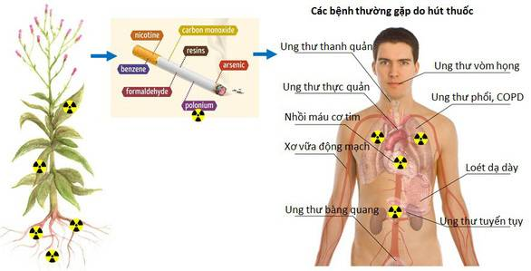 Chất phóng xạ trong thuốc lá gây nguy hiểm